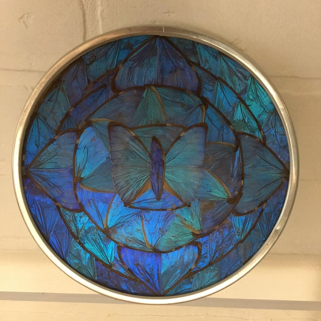Gorgeous vintage Blue Morpho butterfly wings encased in a glass and aluminum display with hook on the reverse.