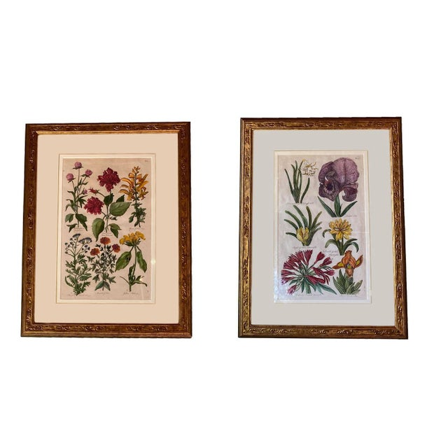 Original Copperplate Engravings by John Hill - a Pair For Sale In Dallas - Image 6 of 6