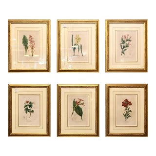 "Set of Six Copper Plate Bessa ""Herbiel De L' Amateur De Fleurs"" Original For Sale"