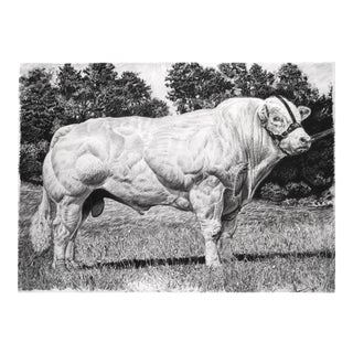 "Contemporary ""Belgian Blue"" Rick Shaefer Charcoal Print For Sale"