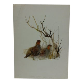 "Original Animal Print ""Partridge"" by Max Stage For Sale"