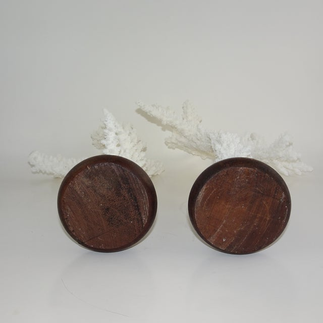 Real Branch Coral Reef that is white in color. The branches are mounted on a round wood base.