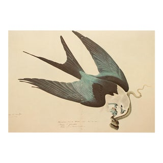 Swallow-Tailed Hawk by John J. Audubon, XL Vintage Cottage Print For Sale