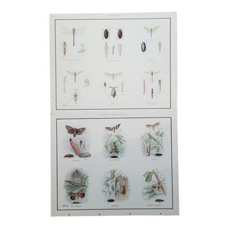 Anatomical Insect Moth Poster - a Pair For Sale