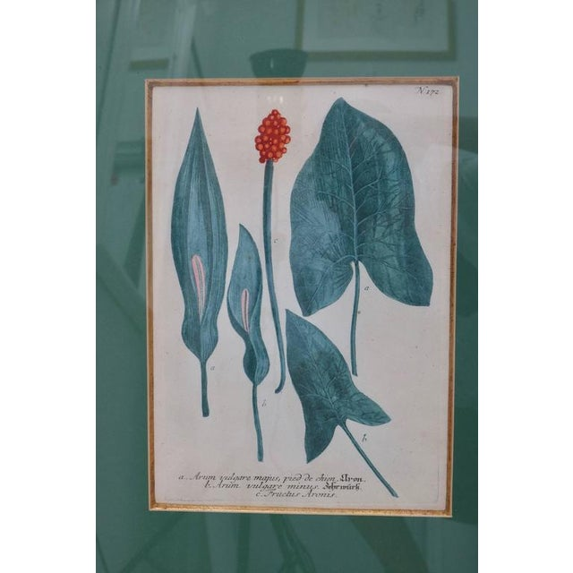 Antique 18th Century Botanical Prints Hand-Colored Engravings - a Set of 6 For Sale - Image 4 of 12
