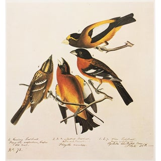 "1960s Cottage Style ""Birds"" Lithograph by Audubon For Sale"
