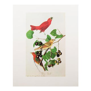 1960s Cottage Style Lithograph of a Red Summer Bird by John James Audubon For Sale