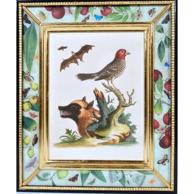 C. 1740 George Edwards Engravings of Birds - Set of 12 For Sale - Image 10 of 12