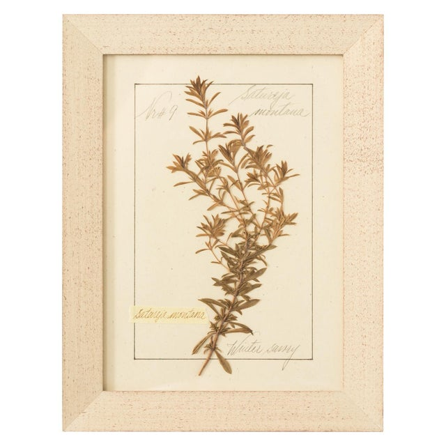 Set of Pressed Herb Frames For Sale - Image 9 of 12