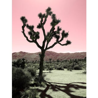 Contemporary 'Desert Shadows, Pink' Photography by Kristin Hart, 36x42 For Sale