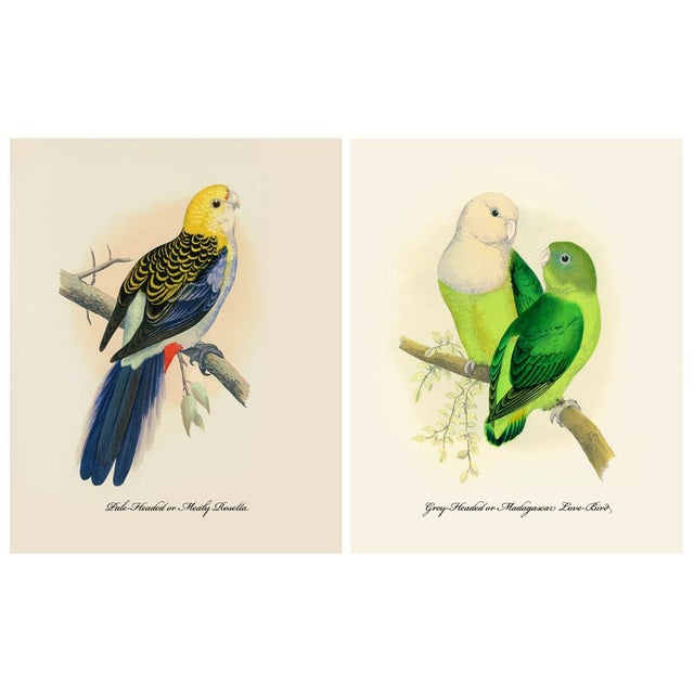 1884 Alexander Francis Lydon, Parrot Reproduction Set of 12, N1 For Sale In Dallas - Image 6 of 11