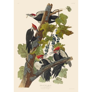 John James Audubon Print, Pileated Woodpecker For Sale