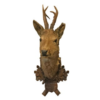 19th Century Austrian Roe Deer Trophy Mount For Sale