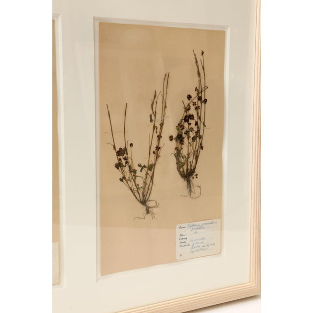 Wood Framed Set of Four Herbaria For Sale - Image 7 of 13