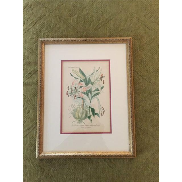 Botanical Prints - Image 2 of 4