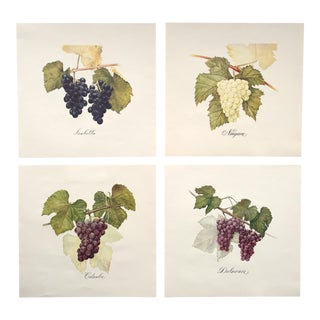 Vintage Original Finger Lakes New York Grape Lithographs - Set of 4 For Sale