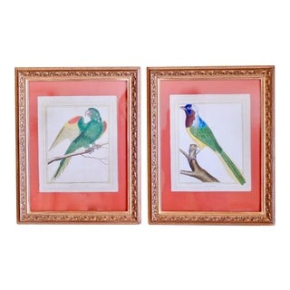 Colorful Bird Engravings by François Martinet, 18th Century - A Pair For Sale