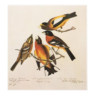 Evening and Black-Headed Grosbeaks by Audubon, 1966 Vintage Cottage Print For Sale