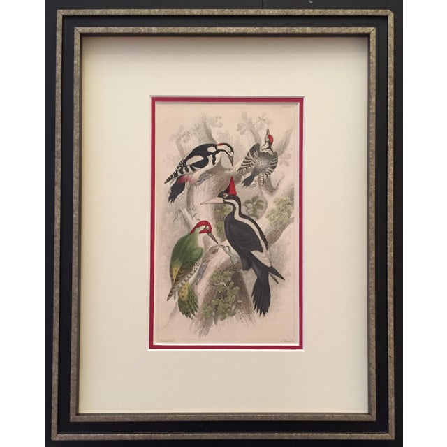 Vintage Italian Bird Print Circa 1850 For Sale
