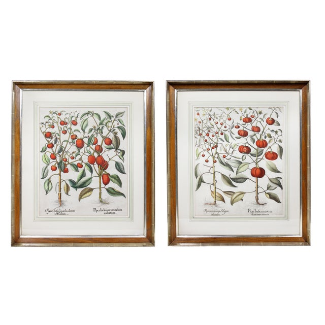 """""""Tomatoes"""" Botanical Engravings by Basilius Besler - a Pair For Sale"""