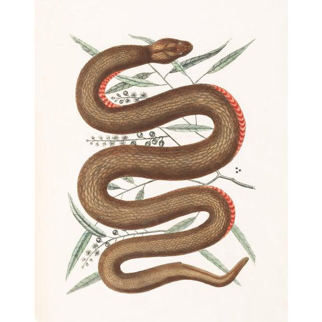Vintage Woodland Snake Print - 16 X 20 For Sale - Image 4 of 5