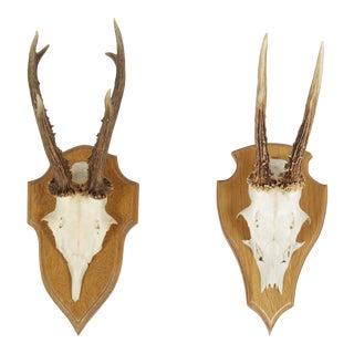 Vintage German Roe Deer Antlers - a Pair For Sale