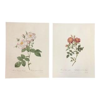 Pair of Botanical Studies After Pierre-Joseph Redouté For Sale