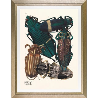 """Framed E. A. Seguy Print, """"Insects"""" Plate No. 13 For Sale"""