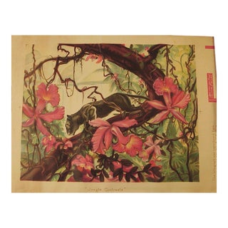"""""""Jungle Contrasts,"""" Original 30s-40s-50s Art Deco Lithograph by H. A. Dworkin For Sale"""