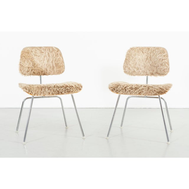 Eames for Herman Miller Dcm Chairs in Longhair Brazilian Cowhide For Sale - Image 13 of 13