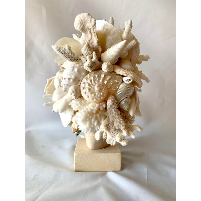Christa's South Seashells Hygiea Shell Encrusted Head For Sale - Image 4 of 9