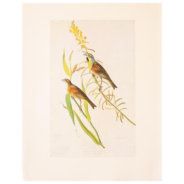 White 1966 Black-Throated Bunting & Dickcissel by John James Audubon, Cottage Style Lithograph For Sale - Image 8 of 8