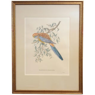 Antique Bird Print by J. Gould, 1875 For Sale
