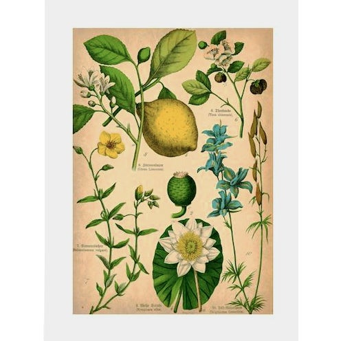 Floral Bookplate Archival Print - Image 1 of 4