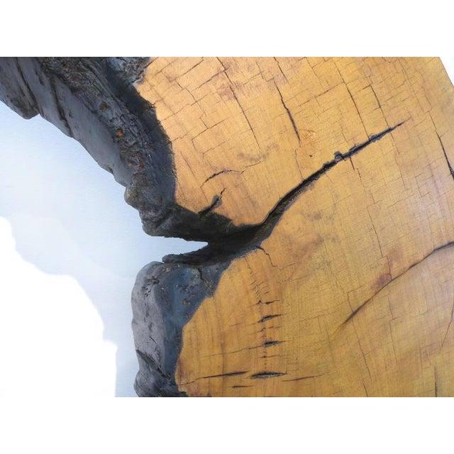 Metal Monumental Amazon Kapok Tree Reclaimed Wood Sculpture by Artist Valeria Totti For Sale - Image 7 of 11