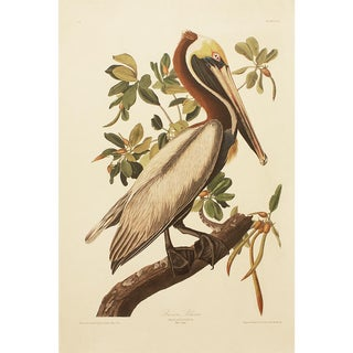 1990s Brown Pelican by Audubon, Large Cottage Print For Sale