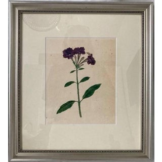 Mid 20th Century Botanical Watercolor Study of a Flower, Framed For Sale