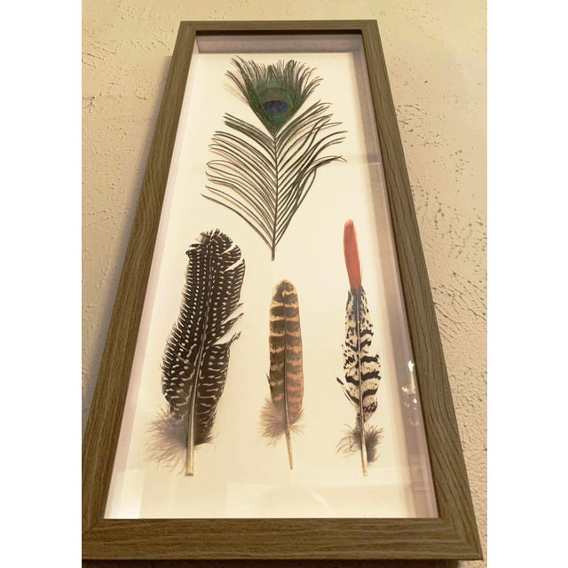 Four Feathers Framed Under Glass by Kalalou For Sale - Image 4 of 6