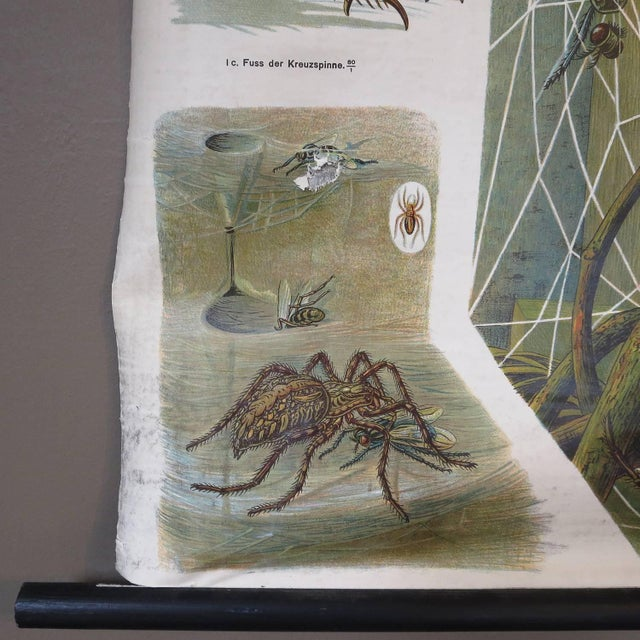 Paper German Biology Chart of Spiders by Schroder Und Kull, 1910 For Sale - Image 7 of 10