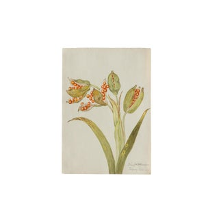 Iris Botanical Antique Watercolor Painting For Sale