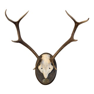 1960s 8 Point Andular Deer Antler Trophy Mounted on Wood, Spain For Sale