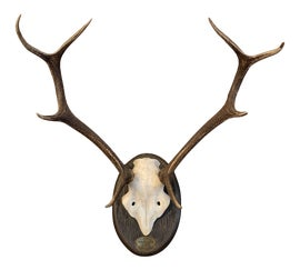 Image of Antler Sculptural Wall Objects
