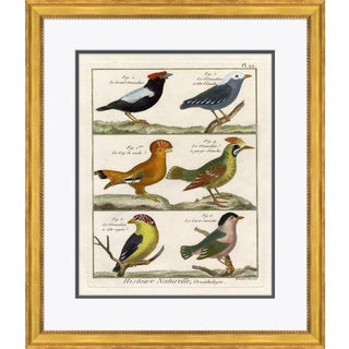 18th Century Parakeet Engravings - Framed Giclee Reproduction For Sale
