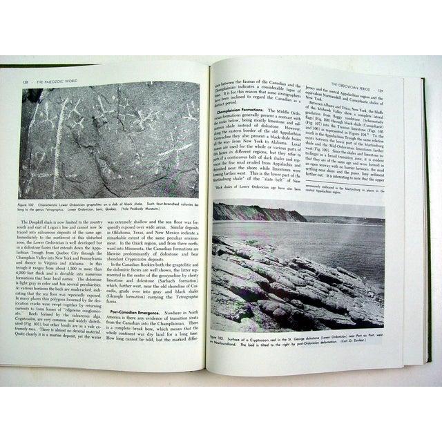 Historical Geology Paleontology - Image 6 of 6