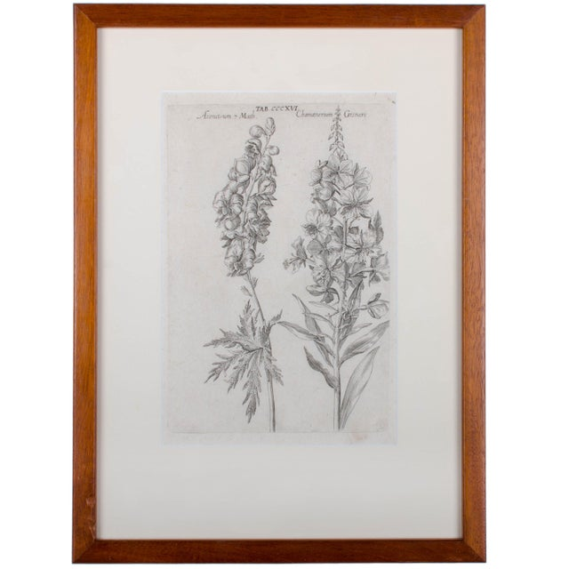 Cottage 1719 De Bry Botanical Engravings - a Pair For Sale - Image 3 of 6