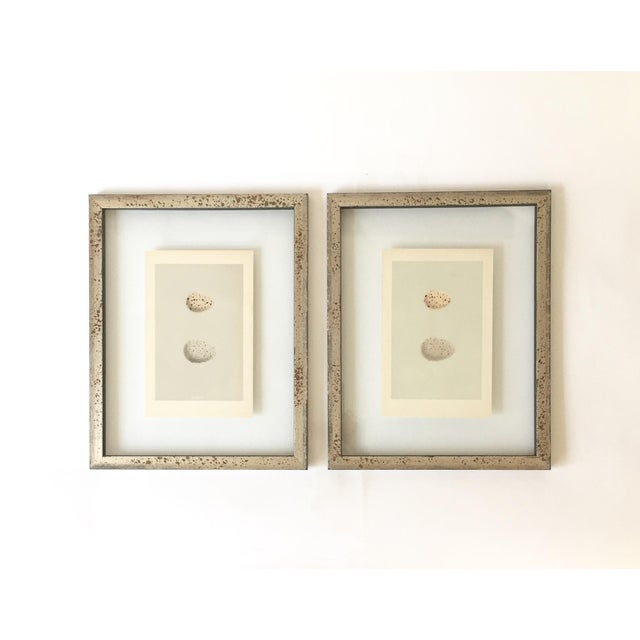 A pair of antique egg prints. They are 1870's English original lithographs by Francis Orpen Morris. Prints are matching,...