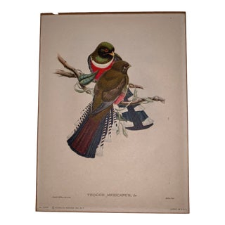 Early 20th Century Antique John Gould & William Hart Trogon Mexicanus Bird Parchment Lithograph Print For Sale