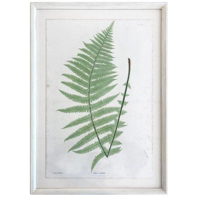 19th Century Bradbury and Evans Nature Printed Fern Print For Sale