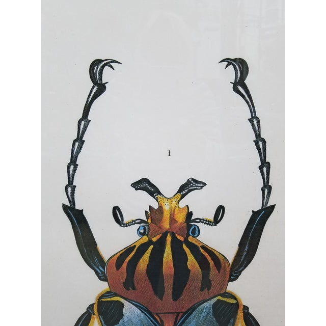 "Vintage Colored French Beetle Print ""Goliath Cacique"" in Black Frame For Sale In Philadelphia - Image 6 of 7"