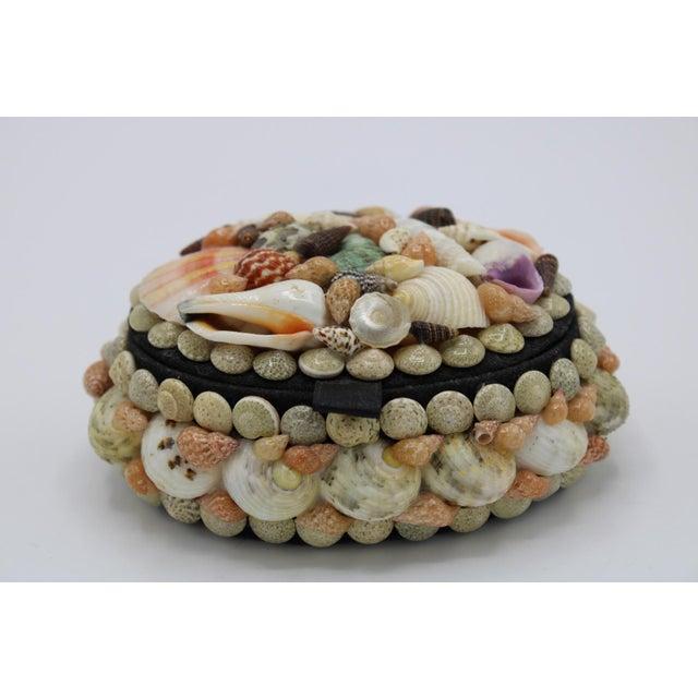 Mid 20th Century Vintage Organic Seashell Jewelry Treasure Box For Sale - Image 6 of 12